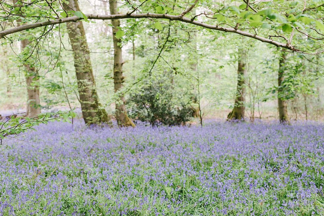 green acres bluebells